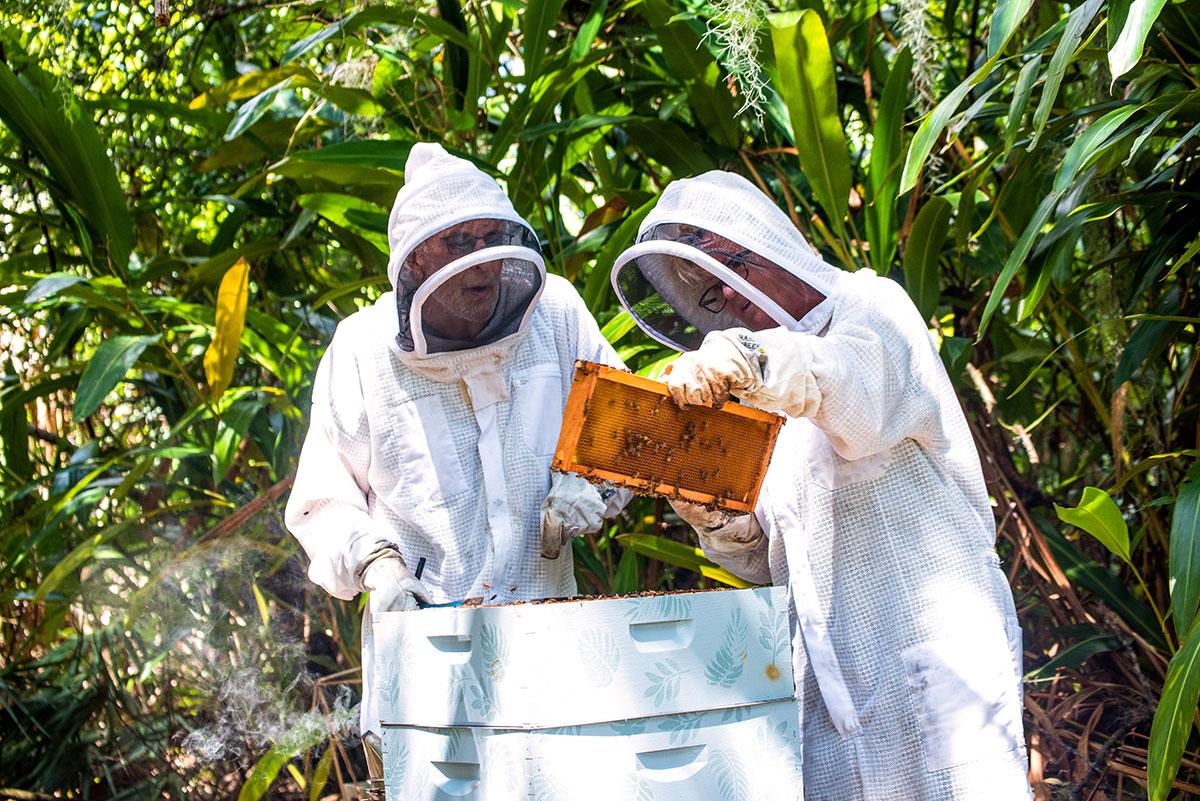 Kontnik and Sorensen collect honey